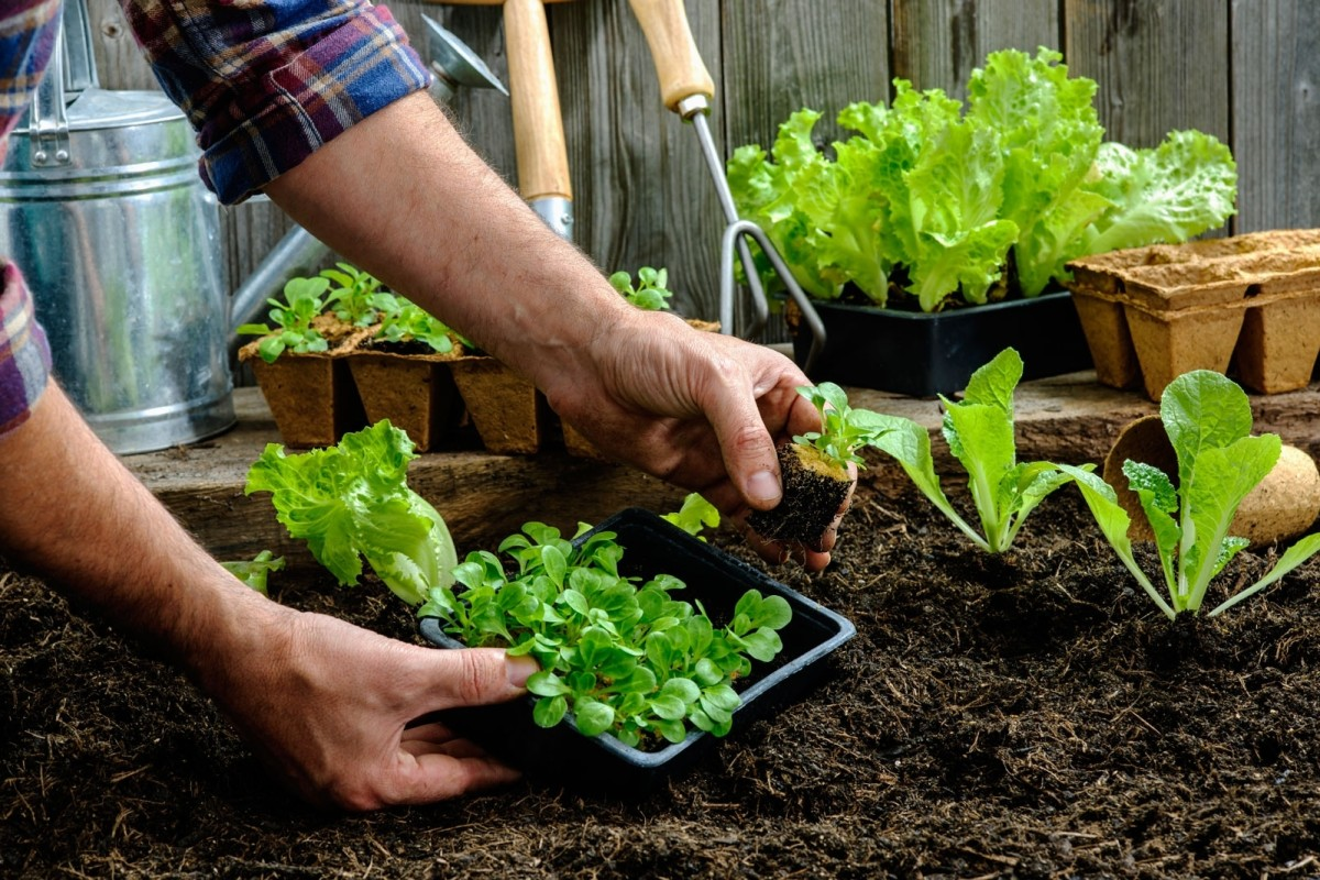 Your Guide To Starting A Vegetable Garden throughout Starting A Vegetable Garden - MakOndo - Home Design